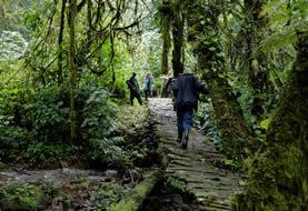 Buhoma-Nkuringo Trail